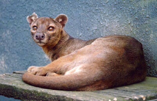 http://www.animals.euweb.cz/zviratka/s013.jpg