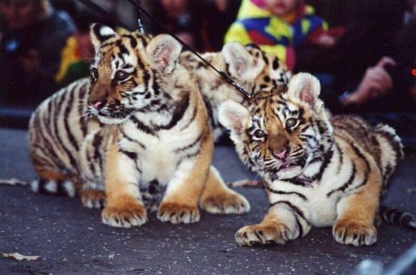 http://www.animals.euweb.cz/zviratka/s027.jpg